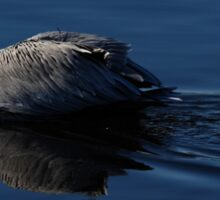 brown pelican Sticker