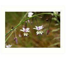 Vanilla Lily Art Print