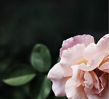 Beauty Shying Away by tanjica