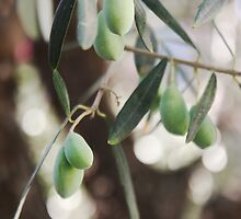 Wonderful Olives by tanjica