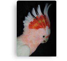 Major Mitchell -  Australian native parrot Canvas Print