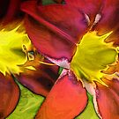 Popping DayLillies by Kathy Nairn