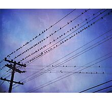 Birds on Wires 2 Photographic Print