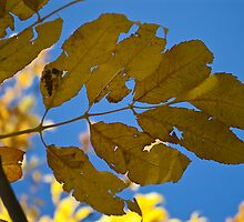 Yellow leaves by Steve plowman