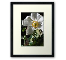 White Flower With Buds Framed Print