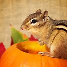 Harvest Chipmunk by powerpig