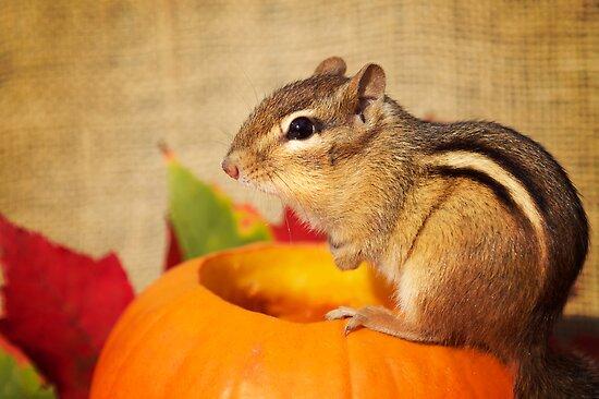 Harvest Chipmunk by powerpig
