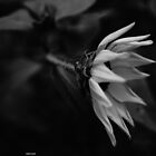 Wildflower by Christopher  Newland