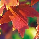 Autumn in Tennessee by jeffrey freeman