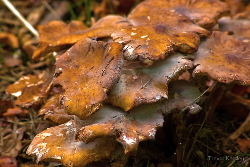 Fungi #5 by Trevor Kersley