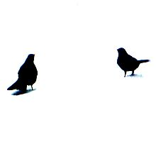 Blackbirds in Snow by Innpictime