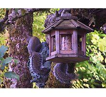 2 Squirrels Raiding The Feeders Photographic Print