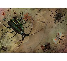 Bugs and Butterflies Photographic Print
