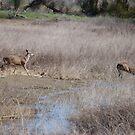 Deer run by Mark Anthony Carter