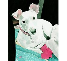 Sully the Jack Russell Terrier Photographic Print