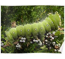 huge green caterpillar Poster