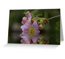 Last Wild Rose  Greeting Card