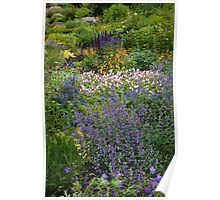 Northern Perennial  Garden Poster