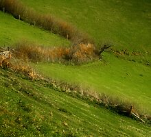 The Hedges Of Zorro by Nigel Finn