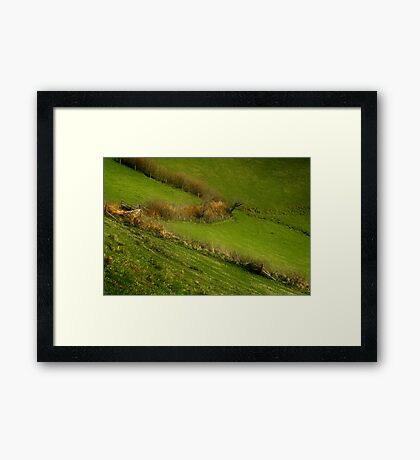 The Hedges Of Zorro Framed Print