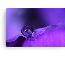 A Drop Of Purple Canvas Print
