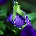 Morning Dew by Micci Shannon