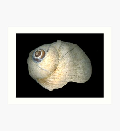 Old battered sea shell Art Print