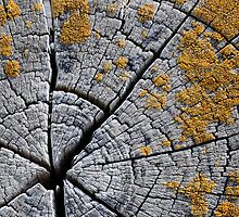 Lichens on Rings by Pete Costick