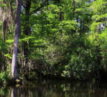 Big Cypress Swamp Sticker