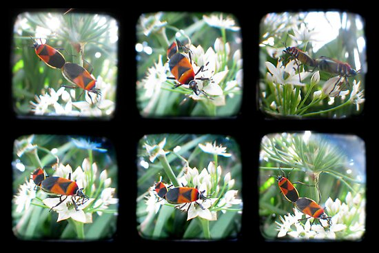 Happy Bugs Polyptych - TTV by Kitsmumma