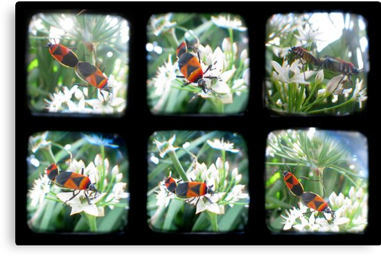 Happy Bugs Polyptych - TTV by Kitsmumma