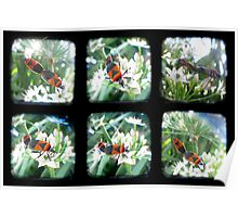Happy Bugs Polyptych - TTV Poster