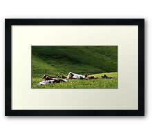 28.5.2015: Cows on Pasture Framed Print