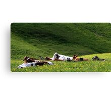 28.5.2015: Cows on Pasture Canvas Print