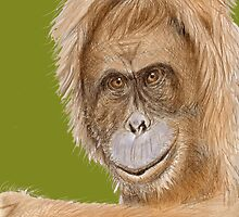 Orang Utan in colour by MayWebb