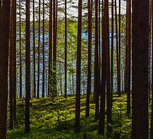 Forest Magic by vdell