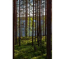 Forest Magic Photographic Print