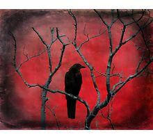 Blackbird In The Red Photographic Print