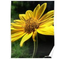Large Yellow Wildflowers 2 Poster
