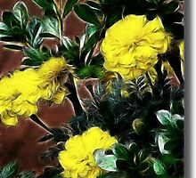 Sunny Yellow by vigor