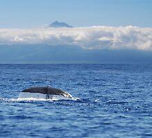 Sperm Whale by Raymond Roe