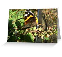 Vanessa atalanta Greeting Card