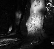 White lit tree by Raymond Roe
