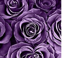 Rose Bouquet in Purple by Igor Shrayer