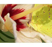 Nectar Station Photographic Print