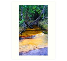 Colourful Creek Art Print