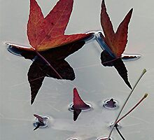 Leaf Sharks by Robin Nellist