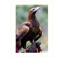 Australian Wedge Tailed Eagle Art Print