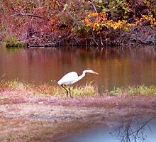 Autumn Reflections For A Herron by Linda Miller Gesualdo