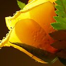 Rose by Roxanne Persson